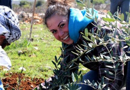 Olive-Tree-Planting