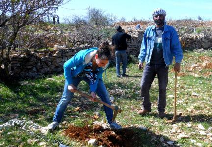 Olive-Tree-Planting (6)